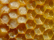 Honey_comb with eggs