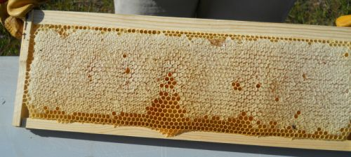 sealed frame of honey